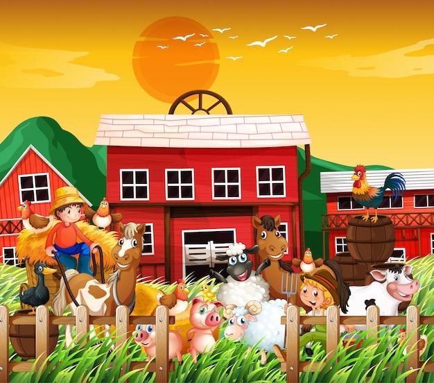 Coltivi nella scena della natura con la casa dell'azienda agricola e la fattoria degli animali sul fondo del tramonto