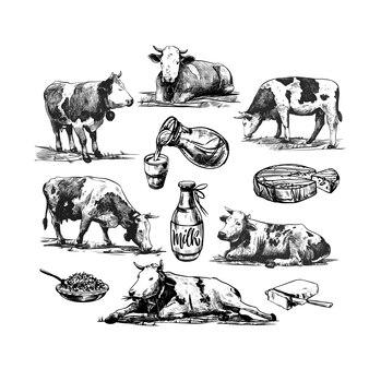 Ферма с коровами и молочными продуктами винтаж векторная иллюстрация гравировки