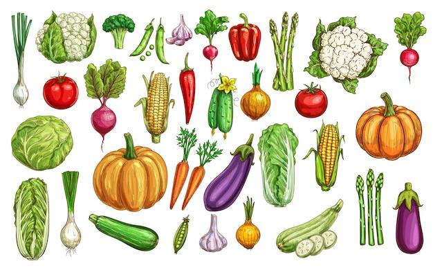 Набор цветных эскизов овощей и зелени фермы.