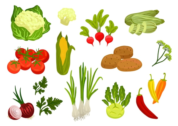 Farm vegetables icons. vegetarian farm vegetables. cauliflower, tomato and onion, corn and parsley, leek and radish, potato, kohlrabi, zucchini, dill, chili pepper elements for grocery store