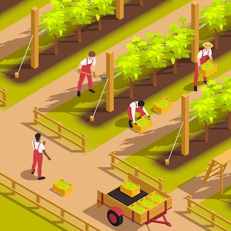 Farm workers in uniform dungarees harvesting grape filling crates putting them in cart isometric composition