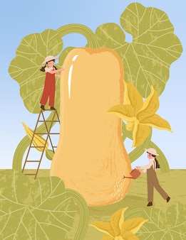 Farmer cartoon characters with butternut squash plant harvest in farm poster illustrations