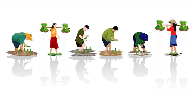 Farmer character transplant rice seeding in paddy field vector design
