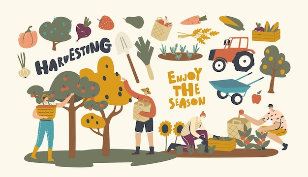 Farmer characters working on garden or orchard harvesting crop. gardeners collect fruit and vegetable, ecological healthy farm production. seasonal work, agriculture. linear people vector illustration