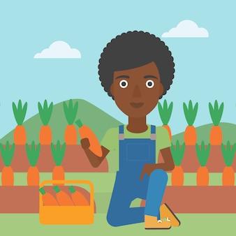 Farmer collecting carrots