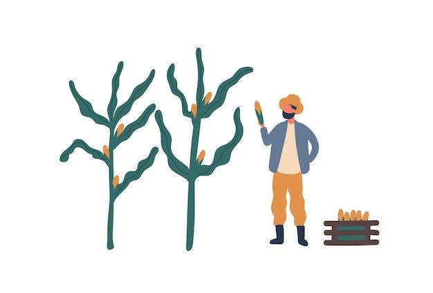 とうもろこしフラットベクトルイラストを収集農家。農場労働者、牧場主の漫画のキャラクター。季節の作物収穫、自然食品栽培のデザイン要素。農村経済、農業の雑用、農業の概念。
