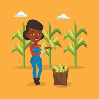 Farmer collecting corn