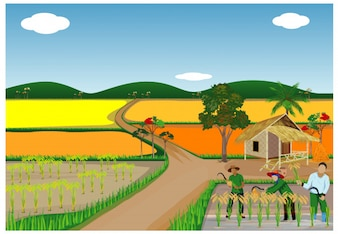 Farmer harvest rice in paddy field vector design
