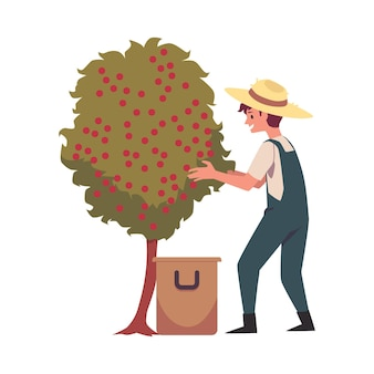 Фермер собирает кофейные зерна с дерева плоской иллюстрации изолированы