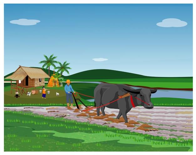 Farmer plow in paddy field