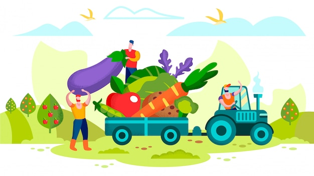 Farmers loading ripe vegetables on tractor trailer
