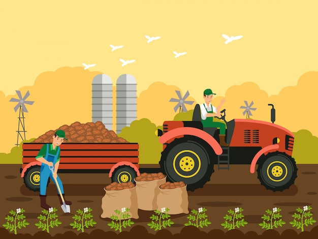 Farmers planting potatoes vector illustration