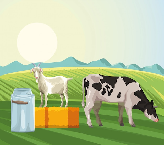 Farming cow eating grass goat canister milk and hay field