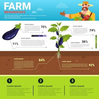 Сельское хозяйство инфографика экологичный органический натуральный овощеводство баннер производство фермы