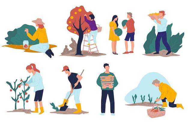 リンゴを摘み、茂みから熟したベリーを集める農民。畑から製品を収穫する農民。土、野菜、にんじんの穴を掘って収穫します。フラットでエコロジカルビジネスベクトル