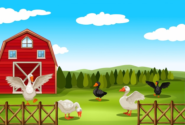 Сельскохозяйственный ландшафт