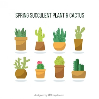 Fashionable cactus collection