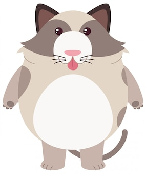 Fat cat on white background