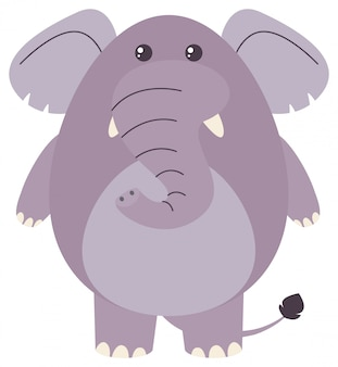 Fat elephant on white background