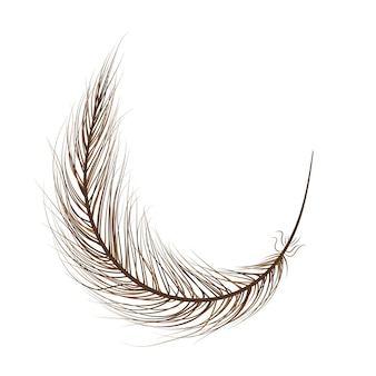 Feather bird brown on a white background.