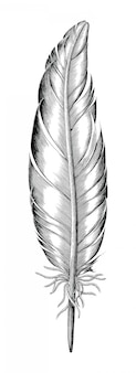 Feather of duck hand draw vintage engraving style isolated on white background