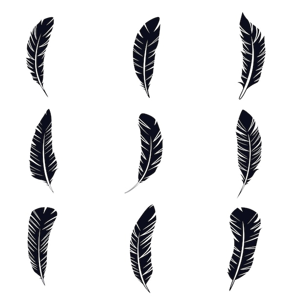 feather vectors photos and psd files free download rh freepik com feather vector design feather vector png