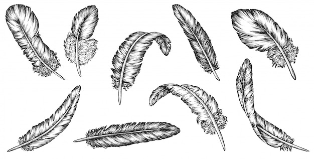 Эскиз пера установлен. винтажное птичье перо