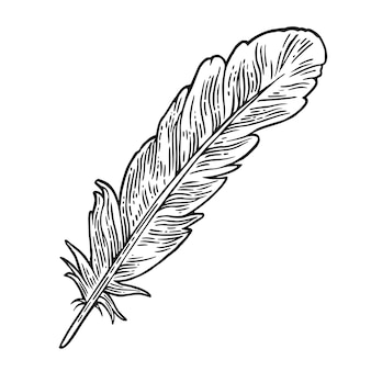 Feather. vintage black engraving illustration.
