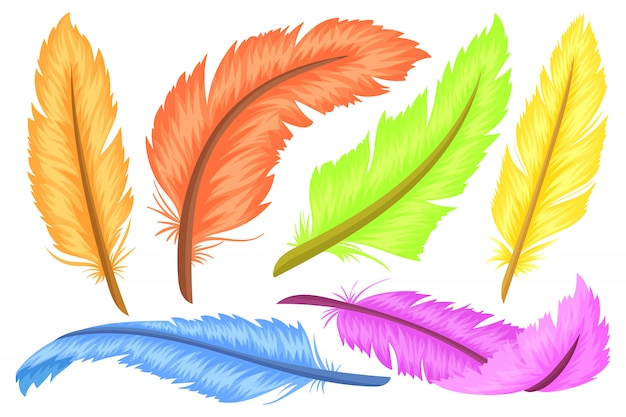 Feathers, different shapes and colors.