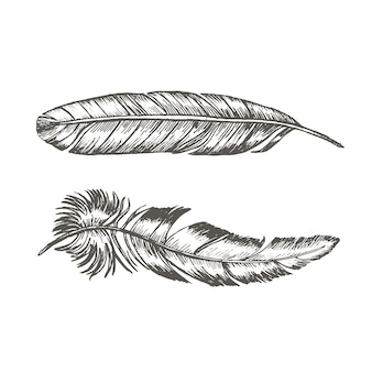 Feathers set hand draw sketch trendy tattoo template boho or ethnic style.