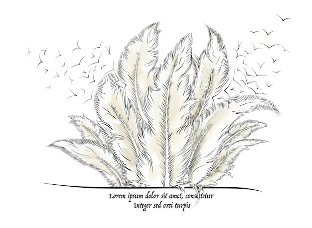 Feathers with text. vector illustration