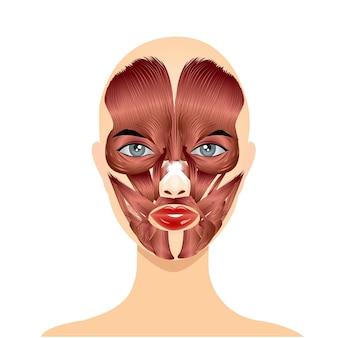 顔の筋肉の位置を持つ女性の顔 Premiumベクター