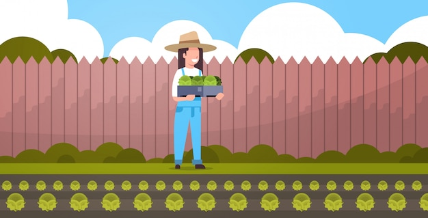 Female farmer holding box with green fresh lettuce cabbage woman harvesting vegetables agricultural worker in uniform eco farming concept backyard farmland background full length