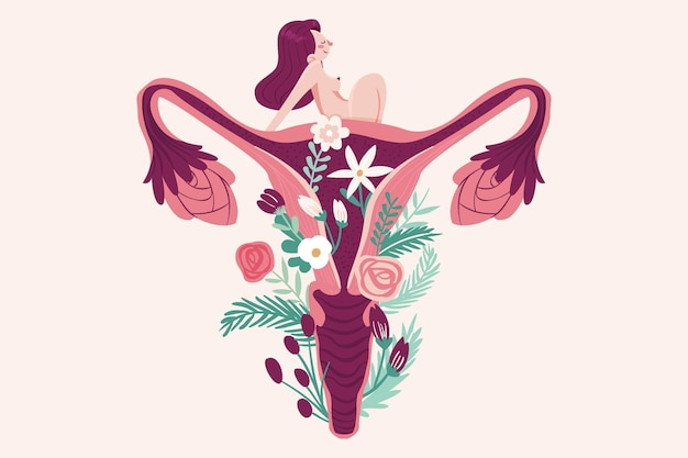 Female reproductive system concept