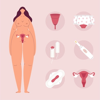 Femalereproductive system concept