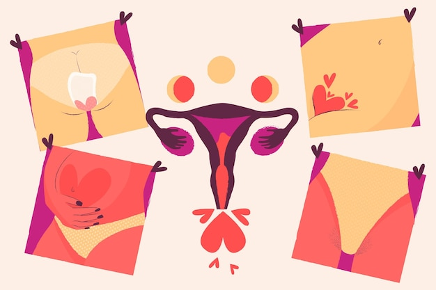 女性の生殖システムの概念