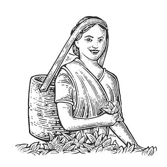 Female tea pickers leaves on plantation