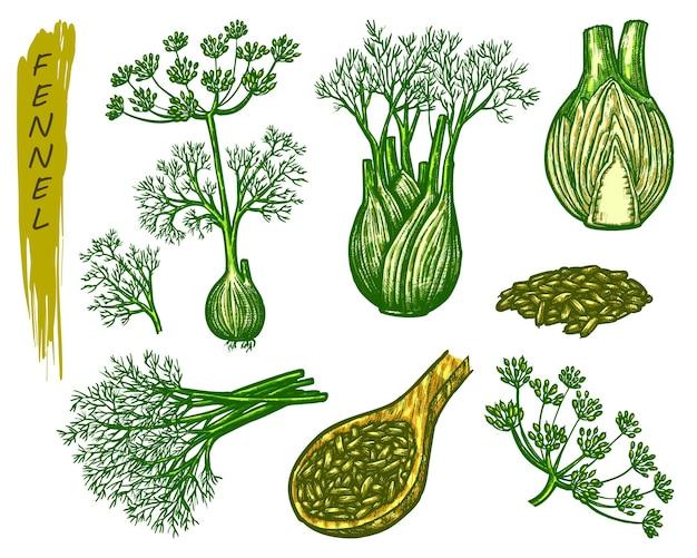 Элементы эскиза фенхеля, специи или кулинарные приправы. рисованной иконки органических естественных растений.
