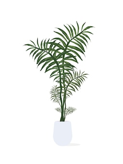 白い鍋にシダ。白い背景で隔離の家のための植物。