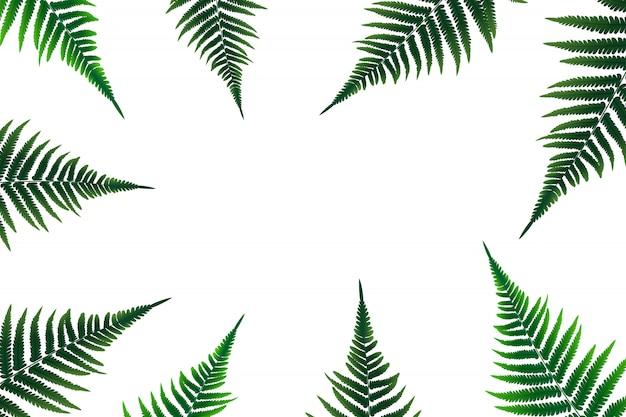 Иллюстрация листьев папоротника