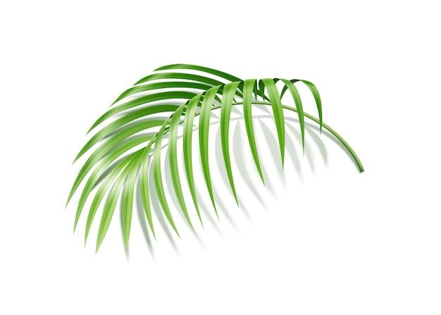 Тропический лист папоротника