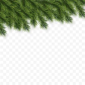 お祝いのクリスマスや新年の背景。クリスマスツリーの枝。休日の背景。