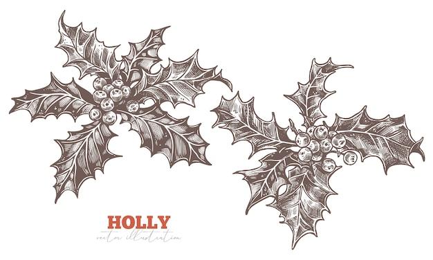 축제 꽃 장식. 홀리 베리 이브와 메리 크리스마스의 유럽 상징. 스케치