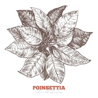 Праздничное цветочное оформление. цветок пуансеттия, символ праздника звезды рождества и знак. эскиз
