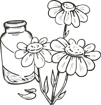Feverfew or chamomile or camomile daisy-like plant. tanacetum parthenium vector illustration