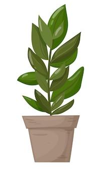 흰색 배경에 있는 냄비 장식용 홈 식물에 있는 무화과나무는 디자인을 위한 훌륭한 식물입니다.