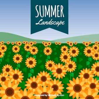 Field background of sunflowers