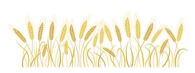 Field cartoon wheat spikelets gold ears ripe, agricultural symbol flour production