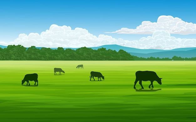 Field in sunny day with cows grazing