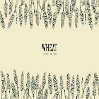Field of wheat vector illustration, ideal for bread packaging, beer labels
